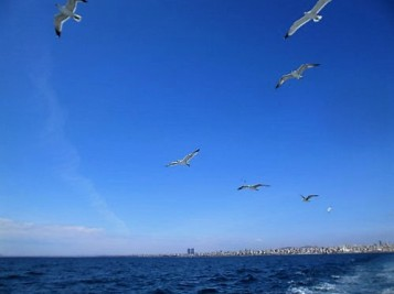 Seagulls chasing the ferry