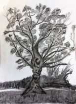 Charcoal-drawing-of-tree