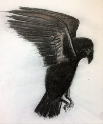 Charcoal sketch of a raven with talons extended